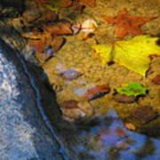 Autumn Jewels Poster