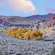 Autumn Landscape In Northern Nevada. Poster