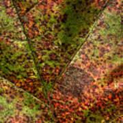 Autumn Leaf Detail Poster