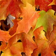 Autumn Leaves - Foliage Poster