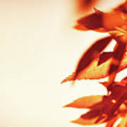 Autumn Leaves Border Poster