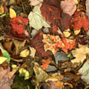 Colorful Autumn Leaves In Blue Green Red Yellow Orange Poster
