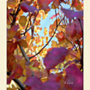 Autumn Leaves In Blue Sky Poster
