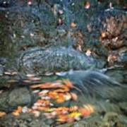 Autumn Leaves In Waterfall Poster