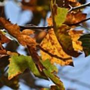 Autumn Leaves Macro 1 Poster