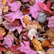 Autumn Leaves On The Forest Floor Poster