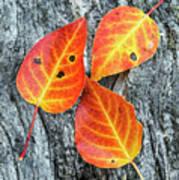 Autumn Leaves On Tree Bark Poster