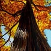 Autumn Majesty Poster
