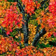 Autumn Maple Bark Poster