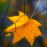 Autumn Maple Leaf Poster