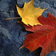 Autumn Maple Leaf Pair On Moody Rock Poster