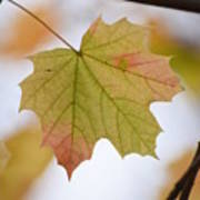 Autumn Maple Leaf Vertical Poster