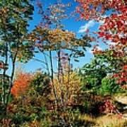 Autumn Maples Poster