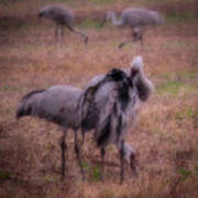 crane migrations essay Crane (bird) cranes are large, long-legged and long-necked birds of the order gruiformes, and family gruidae  sep 6, 2016 — whooping cranes are changing migration patterns in response.