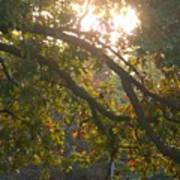 Autumn Morning Glow Poster