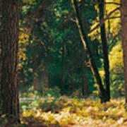 Autumn Morning Yosemite National Park Poster