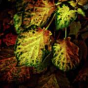 Autumn Motif Poster