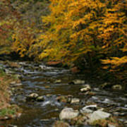 Autumn Mountain Stream Poster