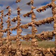 Autumn Net Poster