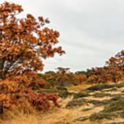 Autumn Oaks 3 Poster