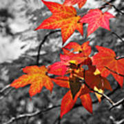 Autumn On Black And White Poster
