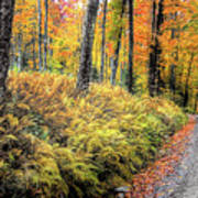 Autumn On Long Pond Road Poster