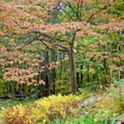 Autumn Paints A Dogwood And Ferns Poster