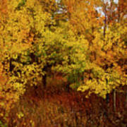 Autumn Palette Poster by Carol Cavalaris