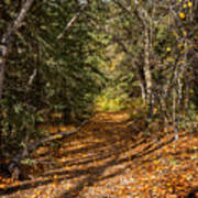 Autumn Path In Spearfish Canyon Poster