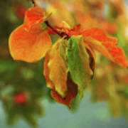 Autumn Persimmon Leaves Poster
