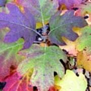 Autumn Rainbows Poster