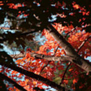 Autumn Red Trees 2015 02 Poster