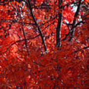 Autumn Red Trees 2015 Poster
