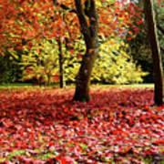 Autumn Reds Poster