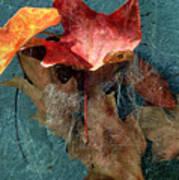 Autumn Seined Poster