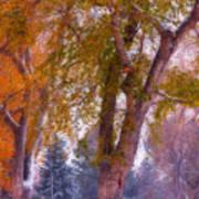 Autumn Snow Park Bench Peace Poster