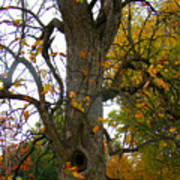 Autumn Spook Poster