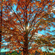 Autumn Star- Paint Poster