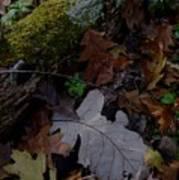 Autumn Still-life Poster