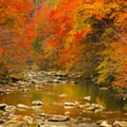 Autumn Stream Poster