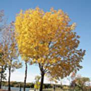 Autumn Sunshine Poster