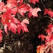 Autumn Surprise Poster