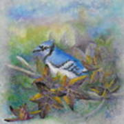 Autumn Sweet Gum With Blue Jay Poster