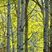 Autumn Through The Trees Poster