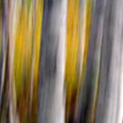 Autumn Timber Poster