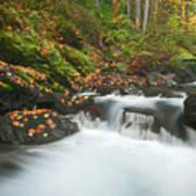 Autumn Treasure Poster
