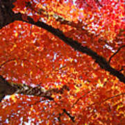 Autumn Tree Art Prints Orange Red Leaves Baslee Troutman Poster