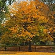 Autumn Tree At Lafayette Park Poster