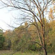Autumn Tree At Sunset Light Poster