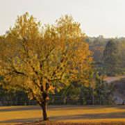 Autumn Tree At Sunset Poster